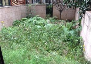 融侨城 花湖汀 带大的花园